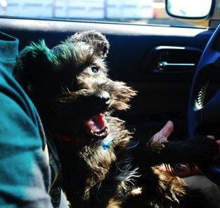Moose is a surprisingly good driver!