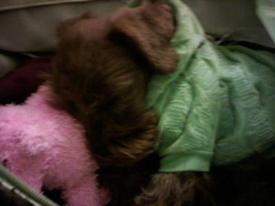 Mylo catching a nap
