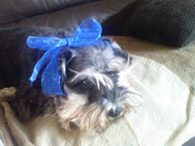 Poppy in her blue phase
