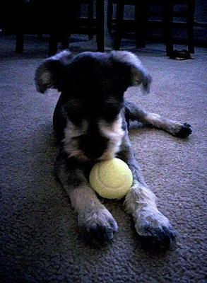 Rambo and his favorite ball!