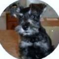 Rocky my little Guardian Angel