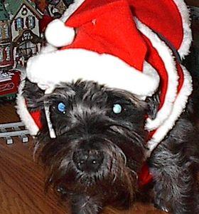 Sabrina in her Santa Hat