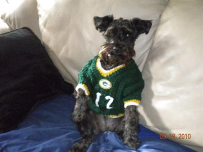 Schnauzer Packers Fan