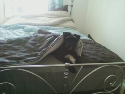i tried to make the bed...he wasn't having it.