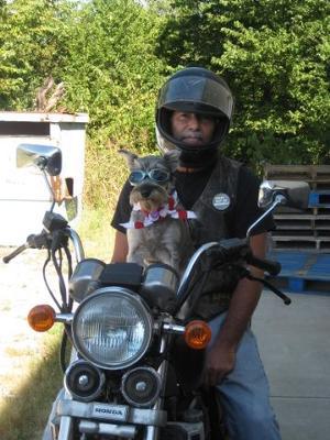 Serious Biker Dog