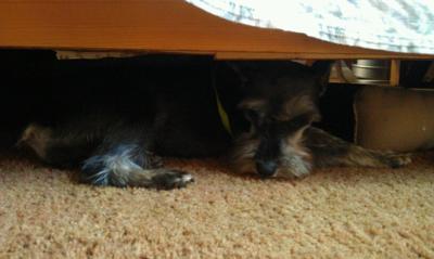 Her favorite hiding spot!