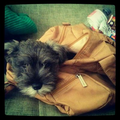 Mr. Weasley loves going to the park but doesnt know how to go down the stairs outside so have to take him in a bag.