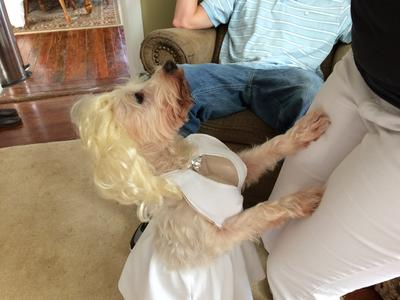 Louie as Marylyn Monroe