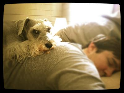 A sleeping human is the best doggie bed ever!