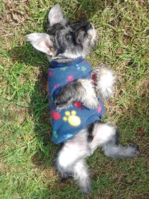 Oliver's new jersey for chilly Autumn days