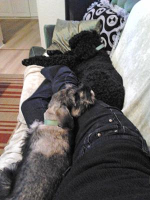 Cuddles on the couch with Ralff and 'mommy'