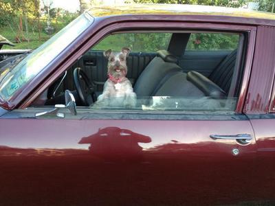 i'm driving! lol
