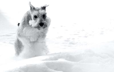 Palmer galloping through 2 feet of snow last winter