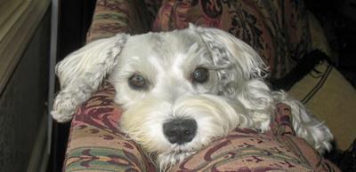My Petie, My Love