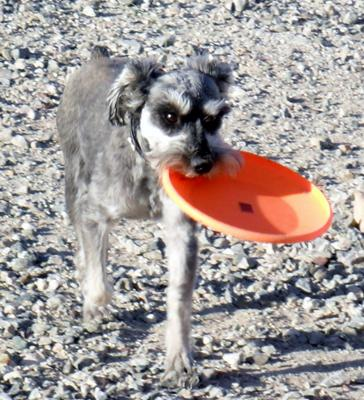 Pootie Tang Loves to Play Frisbee
