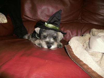 my precious witch