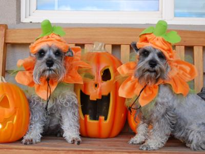 dogs and Halloween, pet costumes