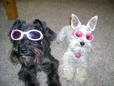 Sporting our Doggles