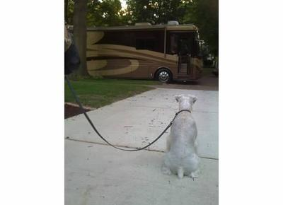 Rudy keeping a watchful eye on the RV