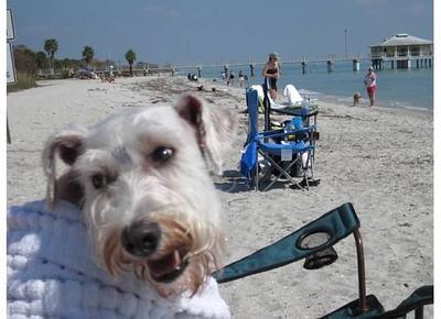 Life's a Beach for Rudy