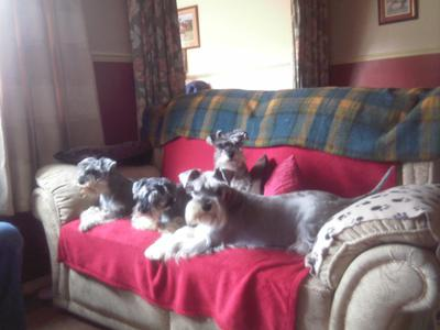 here's the pack lounging on the sofa