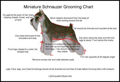 Miniature Schnauzer Grooming Chart