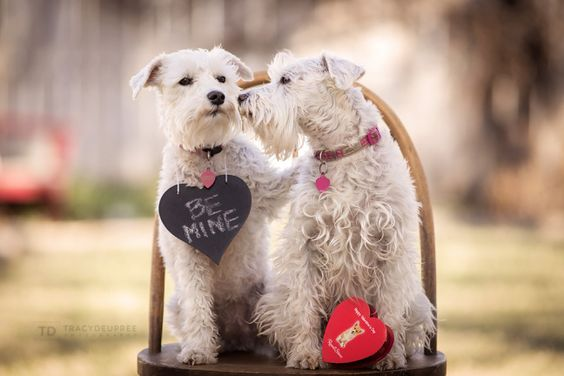 Puppy Dog Valentine Gifts Amp Coloring Pages