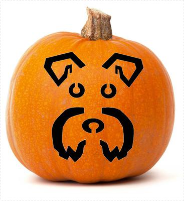Schnauzer Pumpkin Face