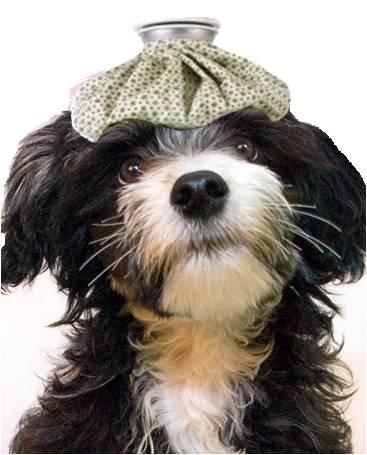 dog illness, sick dog
