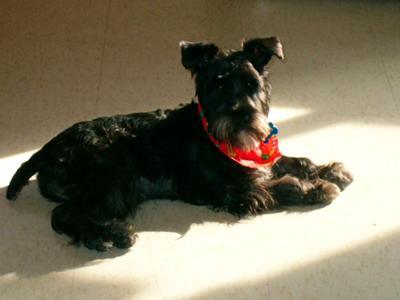 Sookie enjoying the warmth of the sun