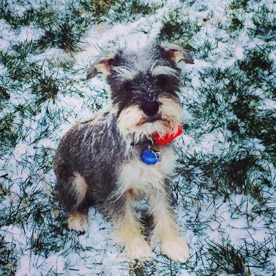 Squirt in Va's first snow of the year 2015