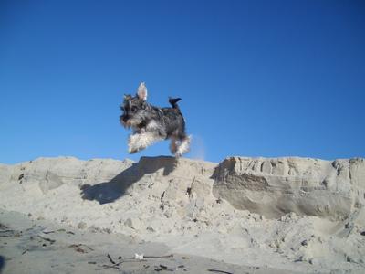 Big jump from little Pimenta