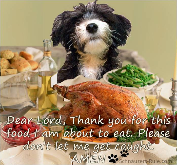 Good Table Foods For Dogs