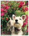 Stop to smell the roses....