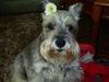 Cassie with Petunia