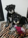 Nico & Emilio