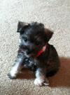My Christmas Puppy