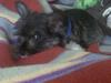 Weechee, when he was a puppy