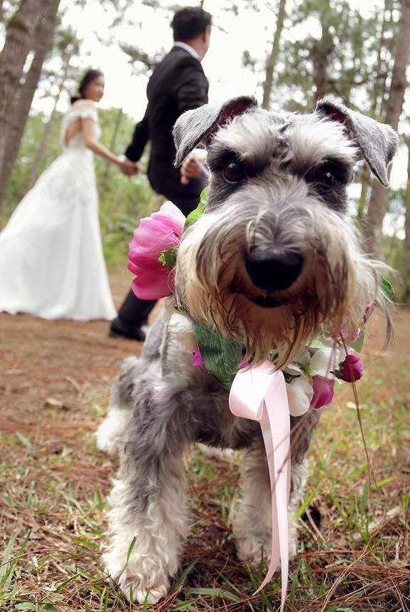 Wedding Dog flower garland