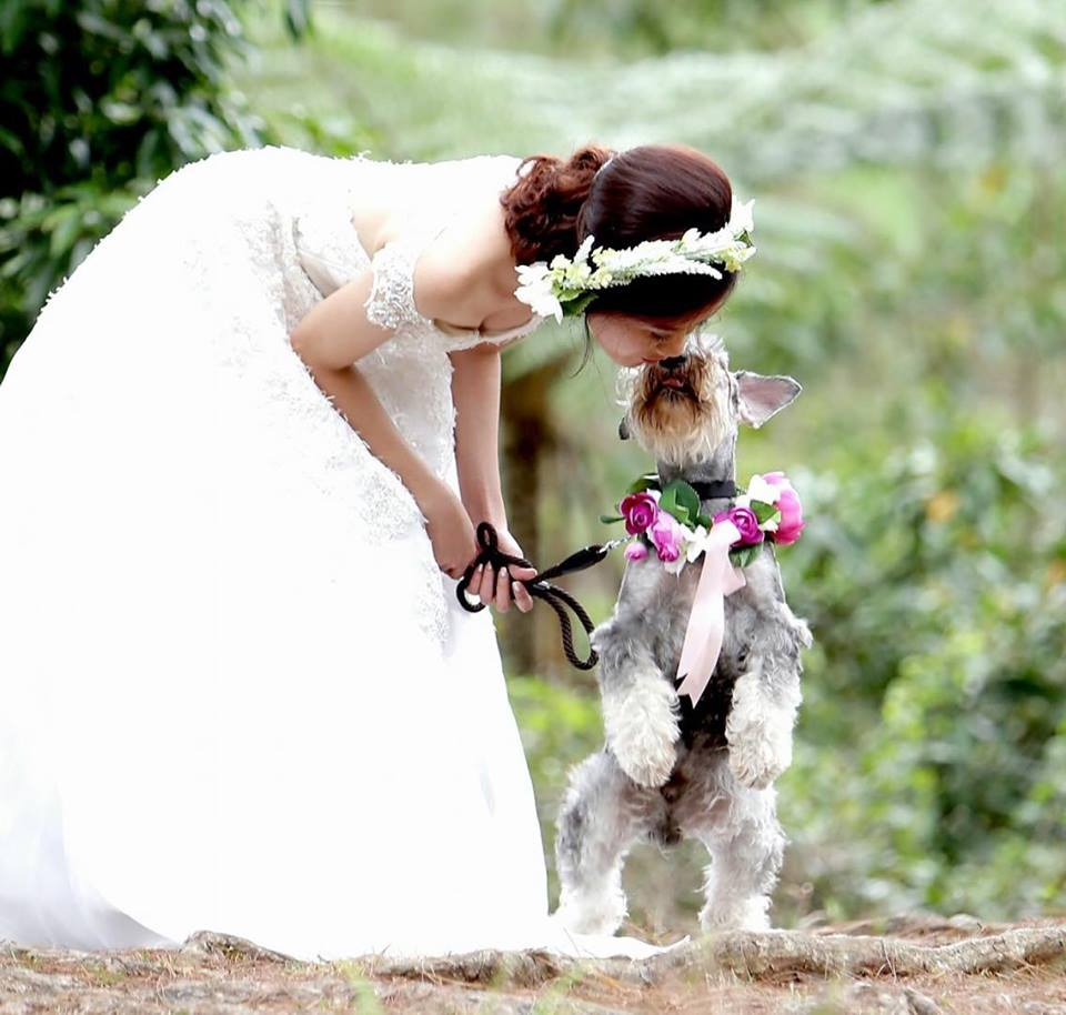 Dog part of wedding