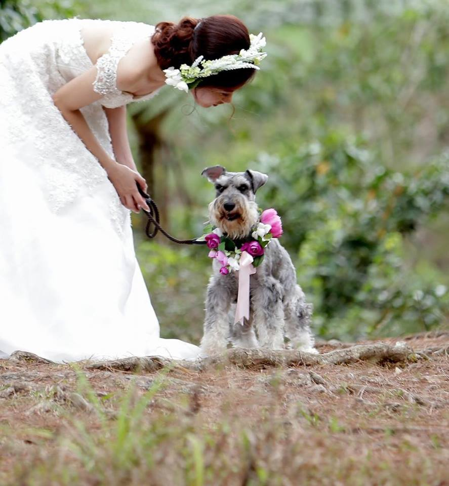 Bride and Schnauzer