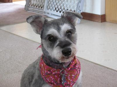 aah! my new hair cut. my owner didn't recognize me
