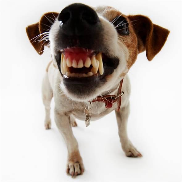 Dog Ready to Bite