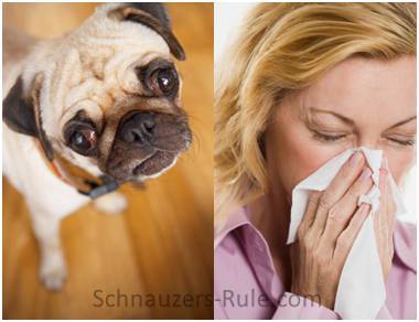 Allergy Sufferers & Dogs