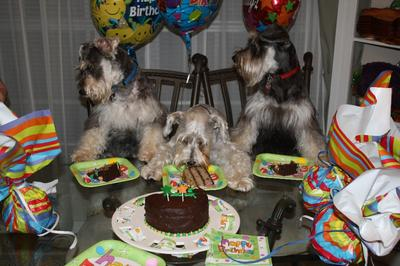 Molly (center) celebrating 2 of her pups 1 Yr Birthdays (Toby on the left & Puma on the Right)!!!  Can we eat our cake, now????