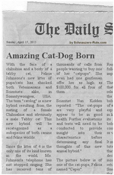 Part Dog Part Cat