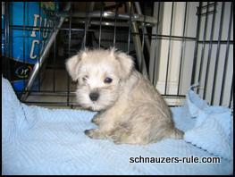 puppy training, crate training