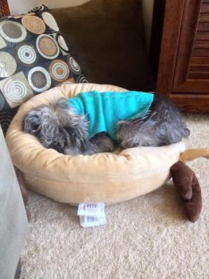 Dilli Doggie Napping, Jan. 2016