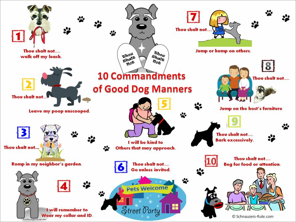 Dog Commandments Pet Etiquette