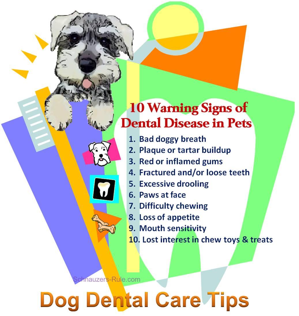 10 Warning Signs of Dental Disease in Pets